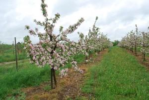slapkausko-ukis-2013-pavasaris (10)