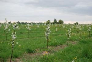 slapkausko-ukis-2013-pavasaris (2)